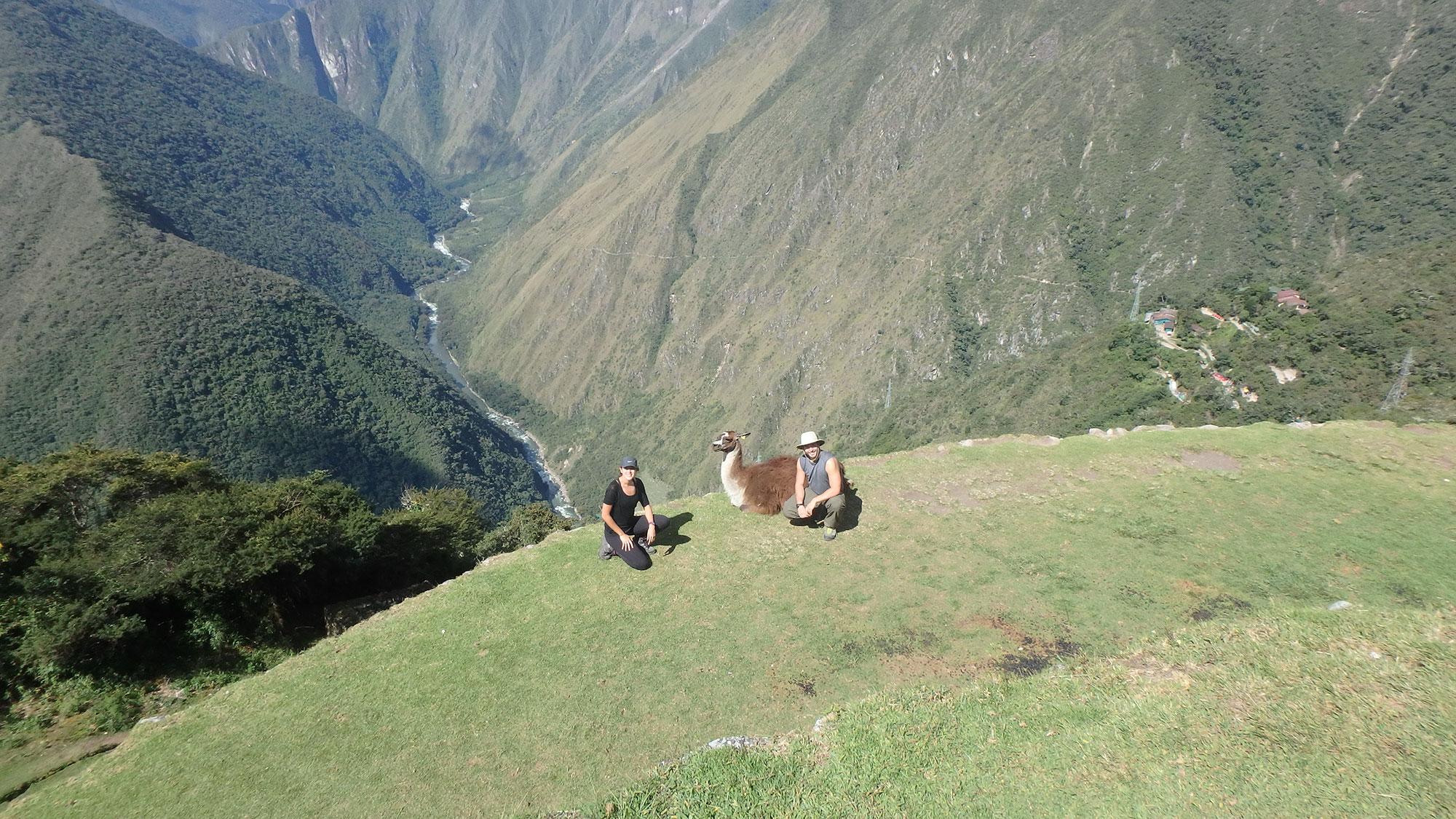 Dan Meghan Llama